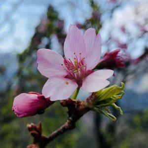 春の展示会\(^o^)/